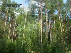 Лес для производства (1)
