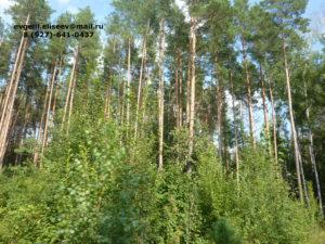 Лес для производства (2)