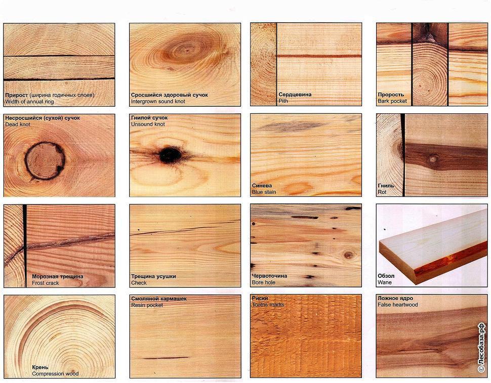 Дефекты древесины и их виды