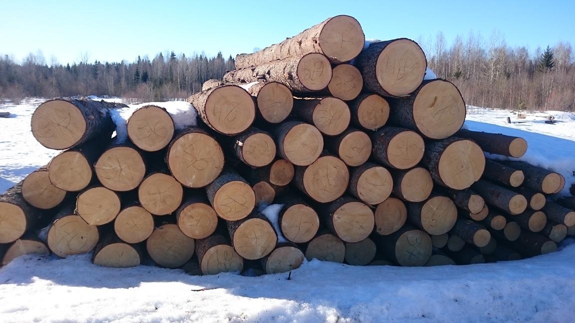 Зимний лес в заготовке